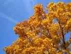 Ein Baum und der Himmel über Stuttgart