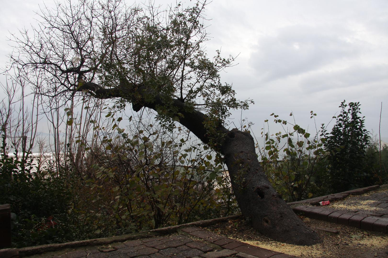 Ein Baum waechst auch zur Seite....