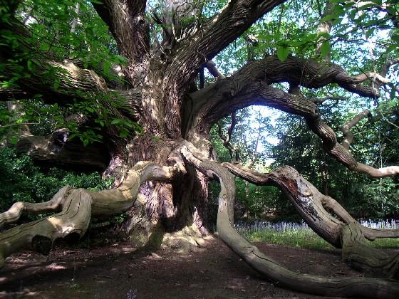 Ein Baum zum Träumen