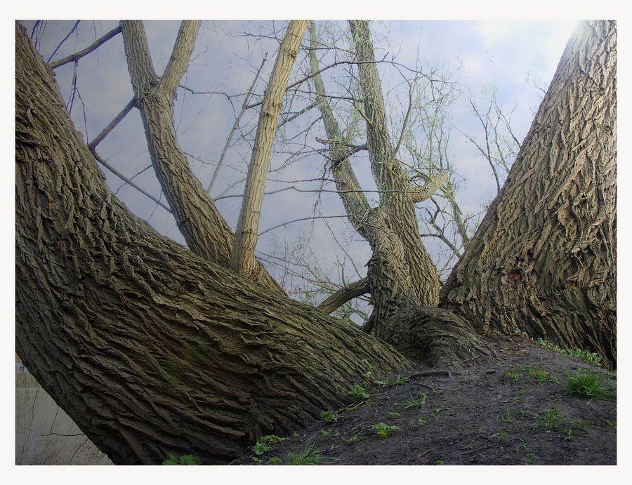 ein Baum ,zwei Richtungen