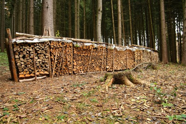 Ein Baumlebenswerk