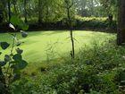 Ein bedeckter Teich auf dem Kühkopf