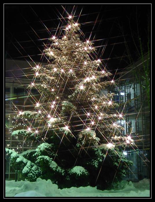 Ein besinnliches Weihnachtsfest 2005...