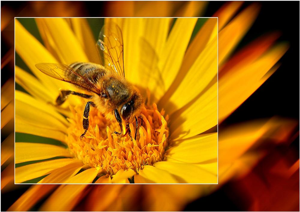 Ein Bienchen