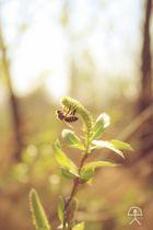 Ein Bienchen fehlte noch...