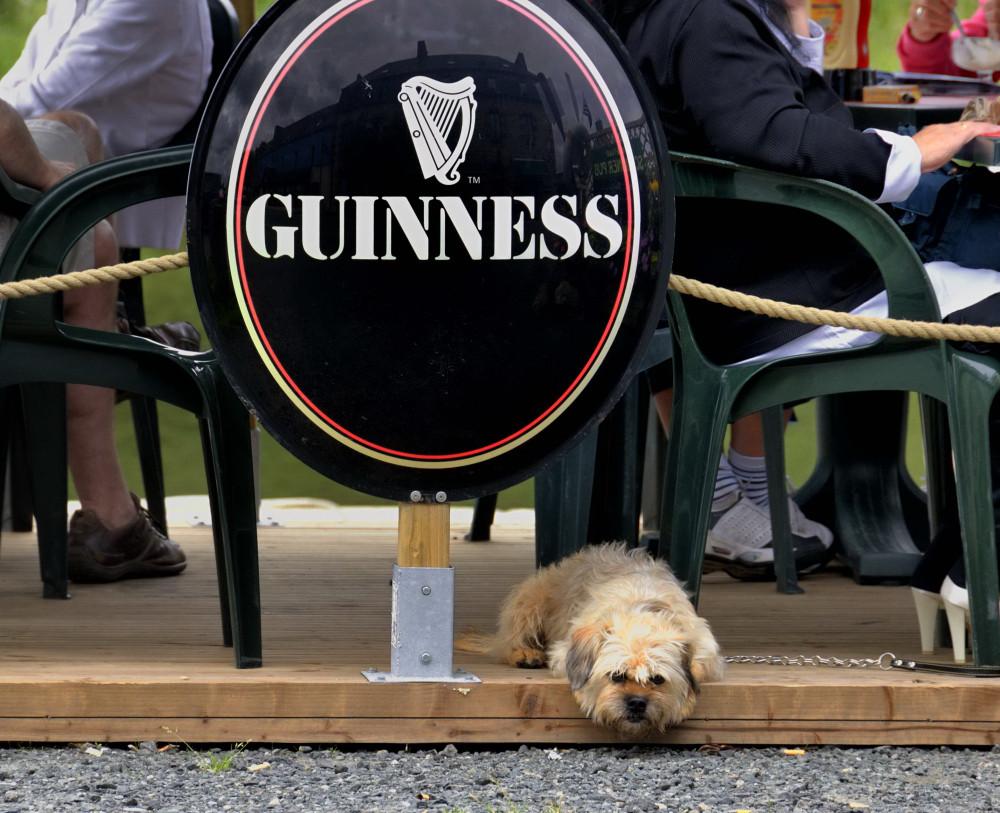 ... ein Bier für Hunde???
