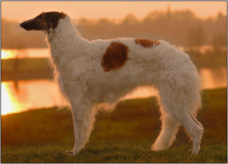 Ein Bild von einem Hund