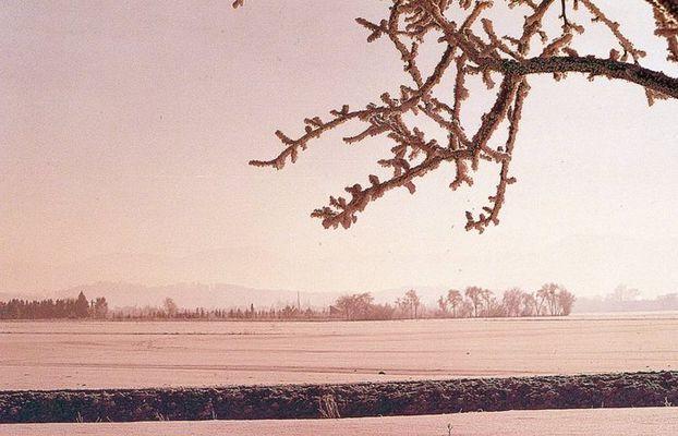 Ein Birnenbaum als Stummer Zeuge im Winter...