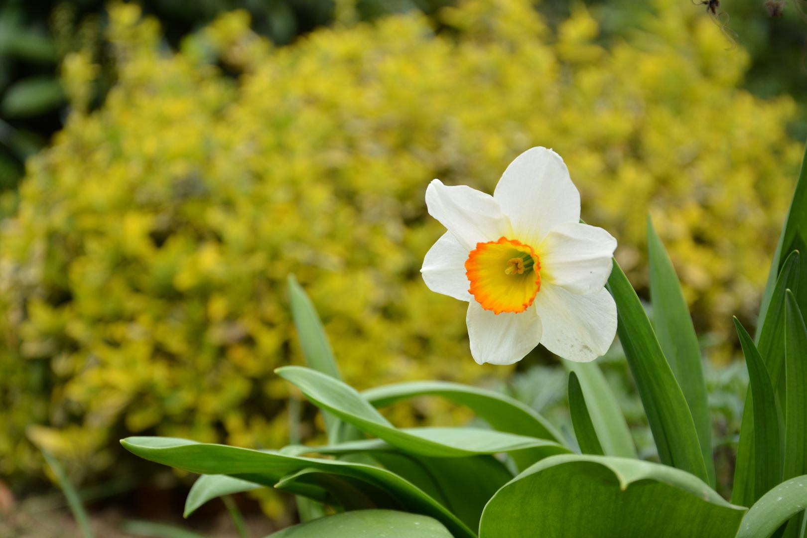 Ein bisschen Frühling
