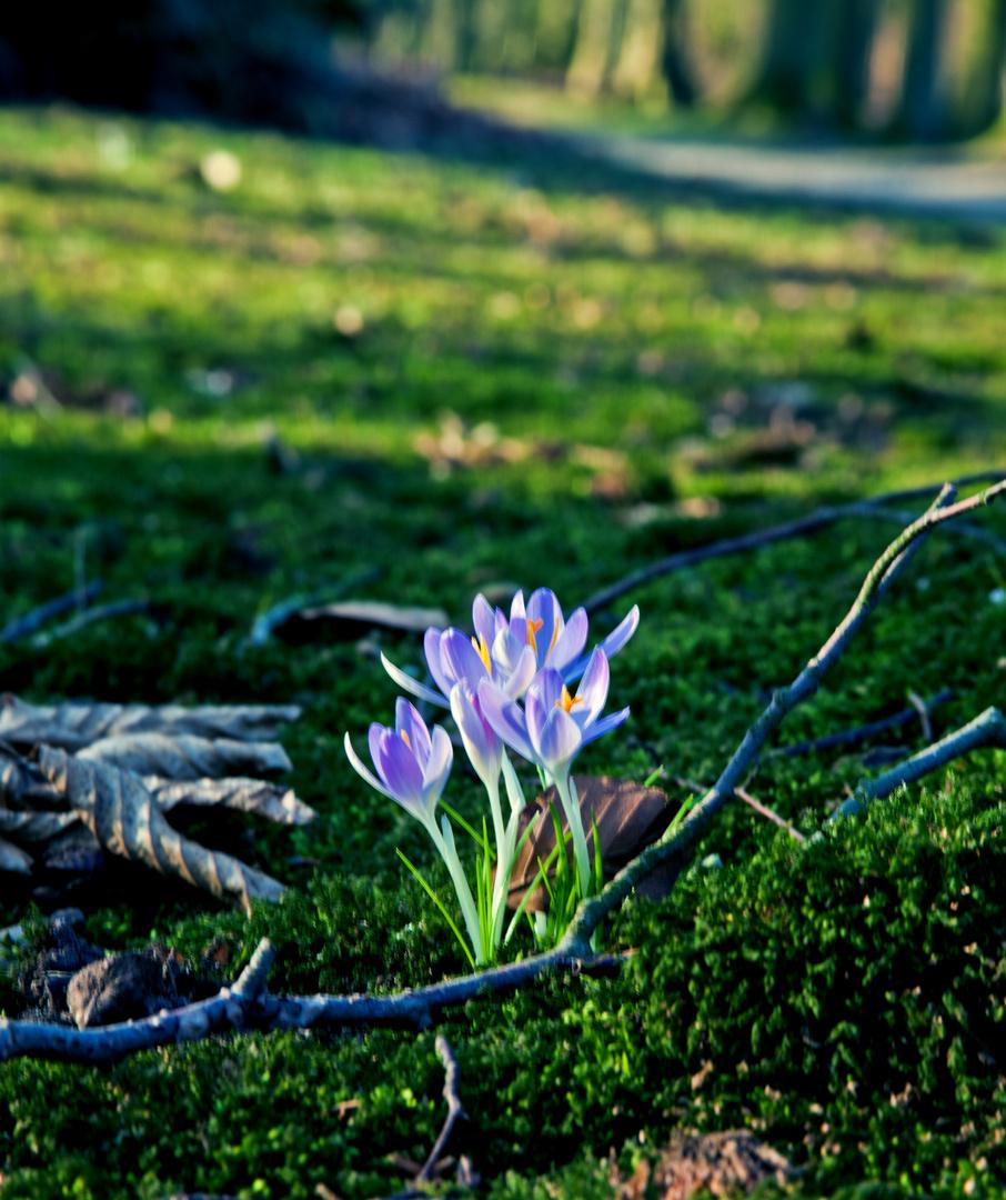 """""""Ein bißchen Frühling"""""""