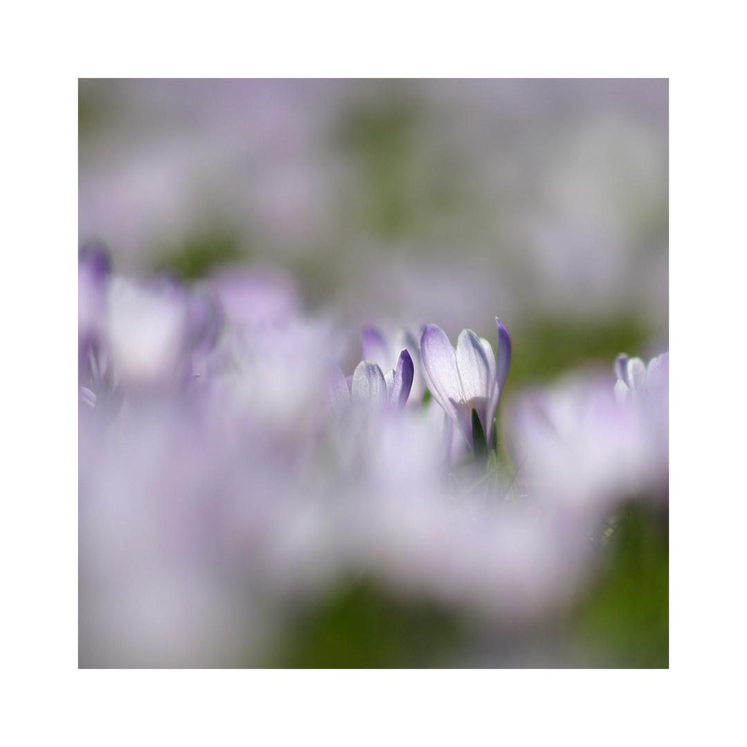 ein bißchen Frühling