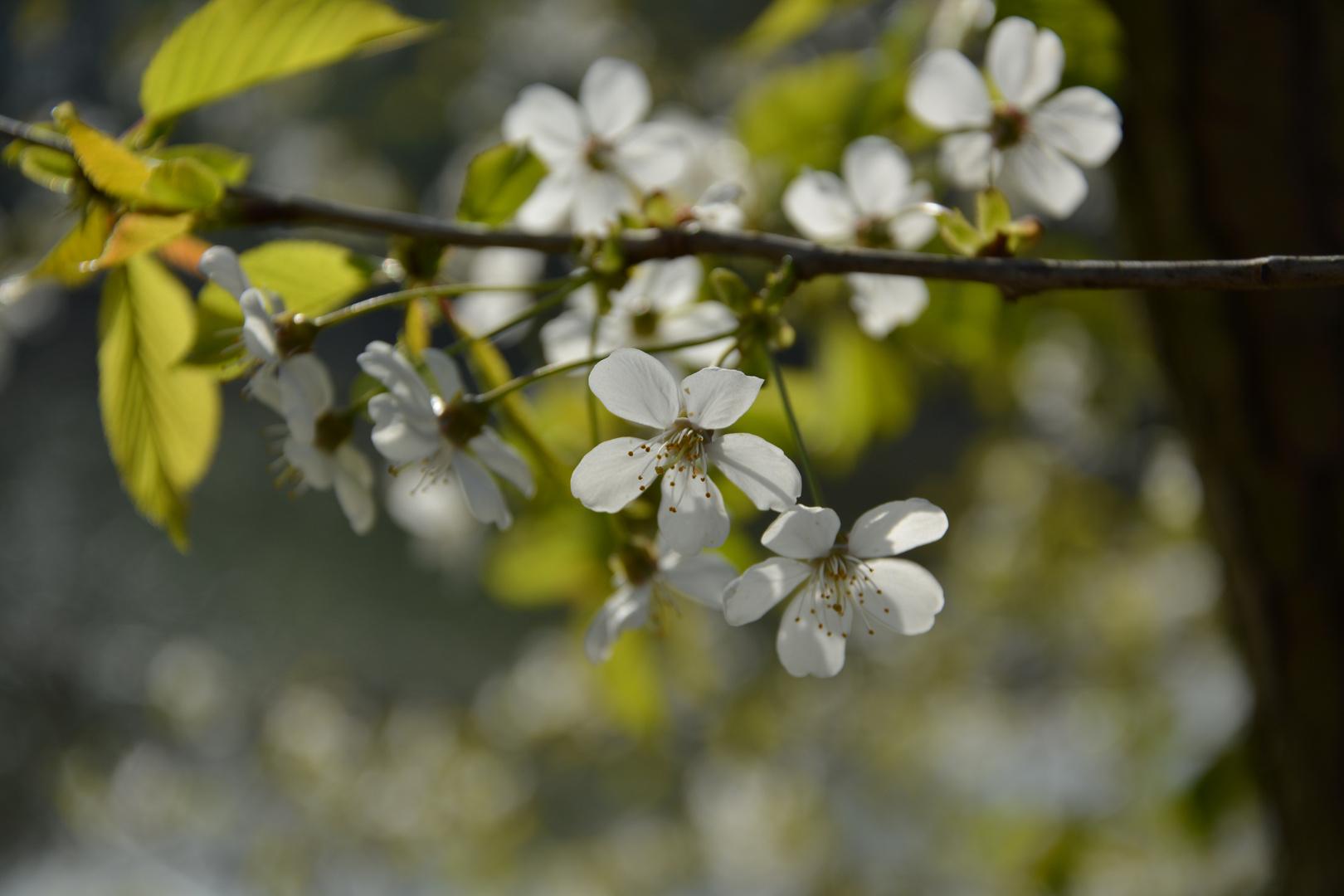Ein bisschen Frühling..