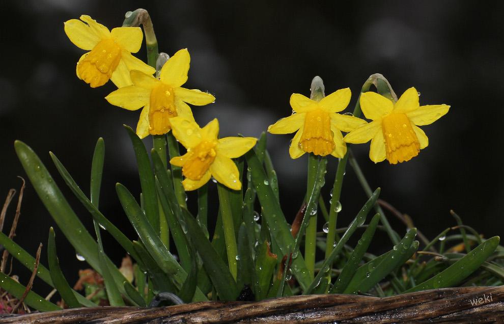 Ein bisschen Frühling im Korb