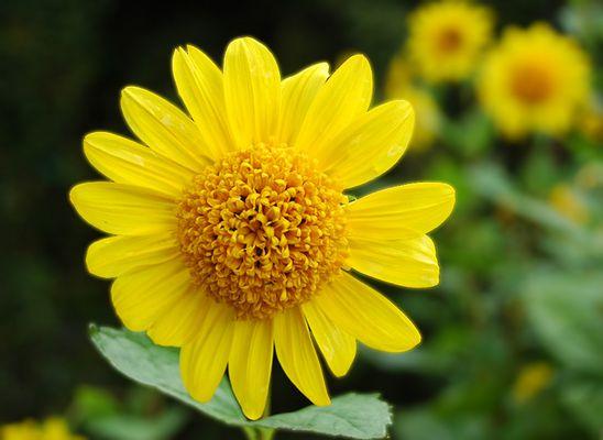 Ein bisschen gelb