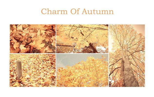 Ein bisschen Herbst...