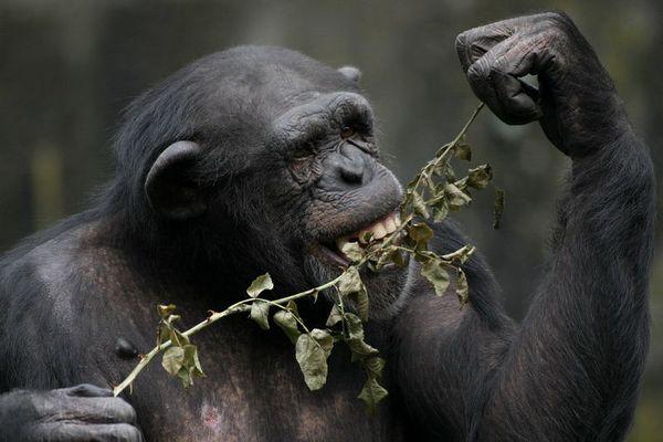 Ein bisschen Zahnpflege muss schon sein