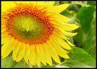 Ein bisserl Sonne....