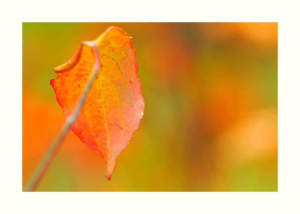 Ein Blatt im Herbst.
