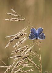Ein Blauer