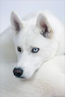 Ein Blaues Auge