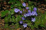 Ein blaues Frühlingsband
