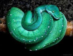 Ein blaugrünes Schätzchen ...