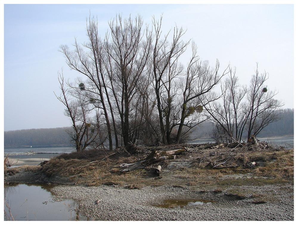 Ein blick auf unsere donau in orth (N.Ö:) noch gibt uns die natur zeit - einen schönen herbst zu