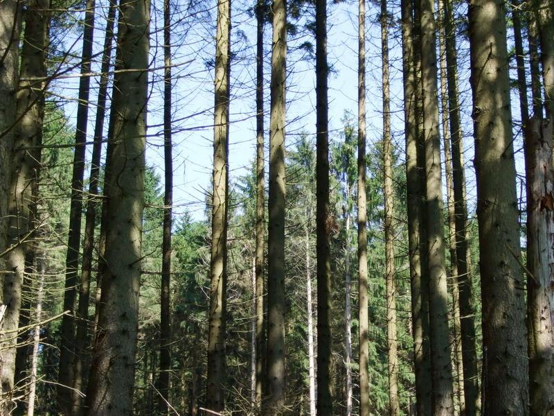 Ein Blick durch den Wald