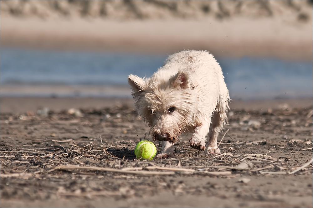 Ein Blick, ein Ball... der Eddie!