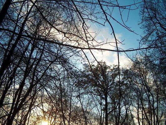 Ein Blick in den Himmel