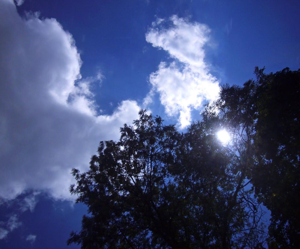 Ein Blick in den Himmel ...