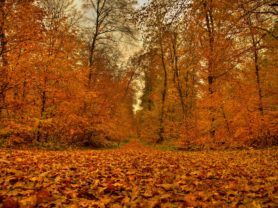 Ein Blick in den Waldweg