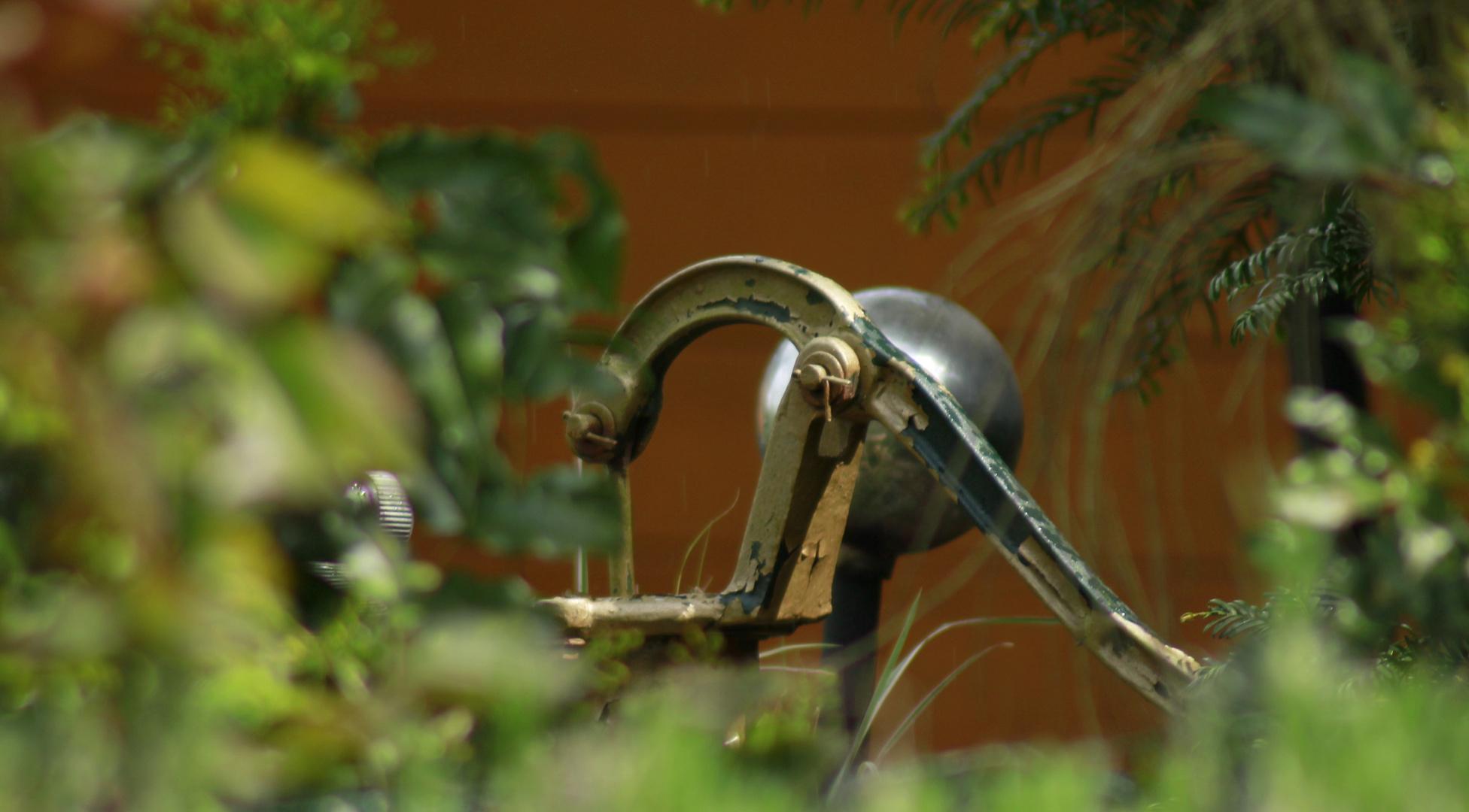 Ein Blick in Nachbar's Garten :-)