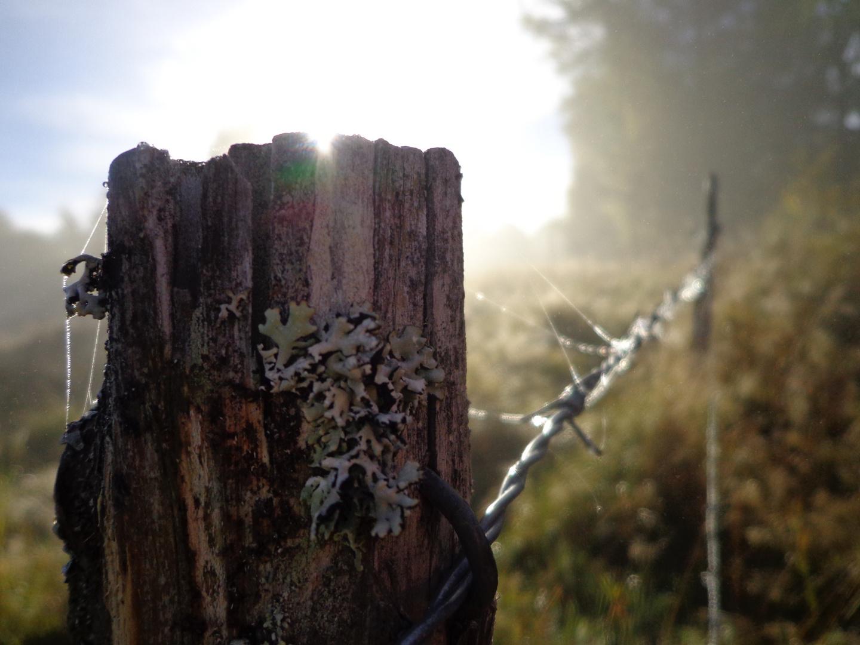 ein Blick ueber den Zaun am fruehen Morgen
