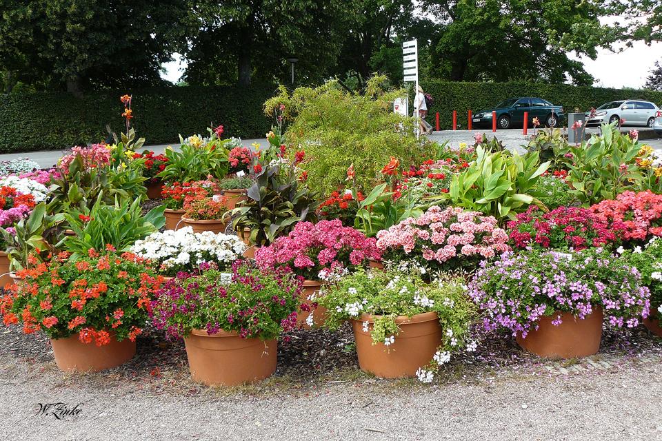 Ein Blickfang der Pflanzengestaltung
