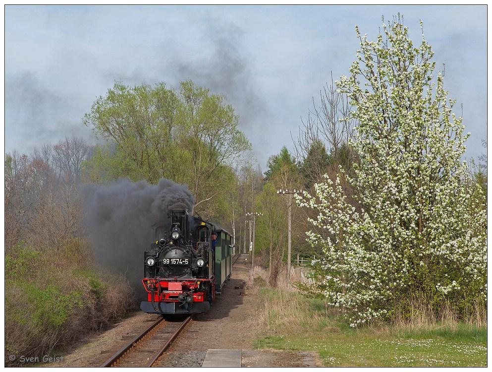 Ein blühender Busch im Oschatzer Rosenthal (1)
