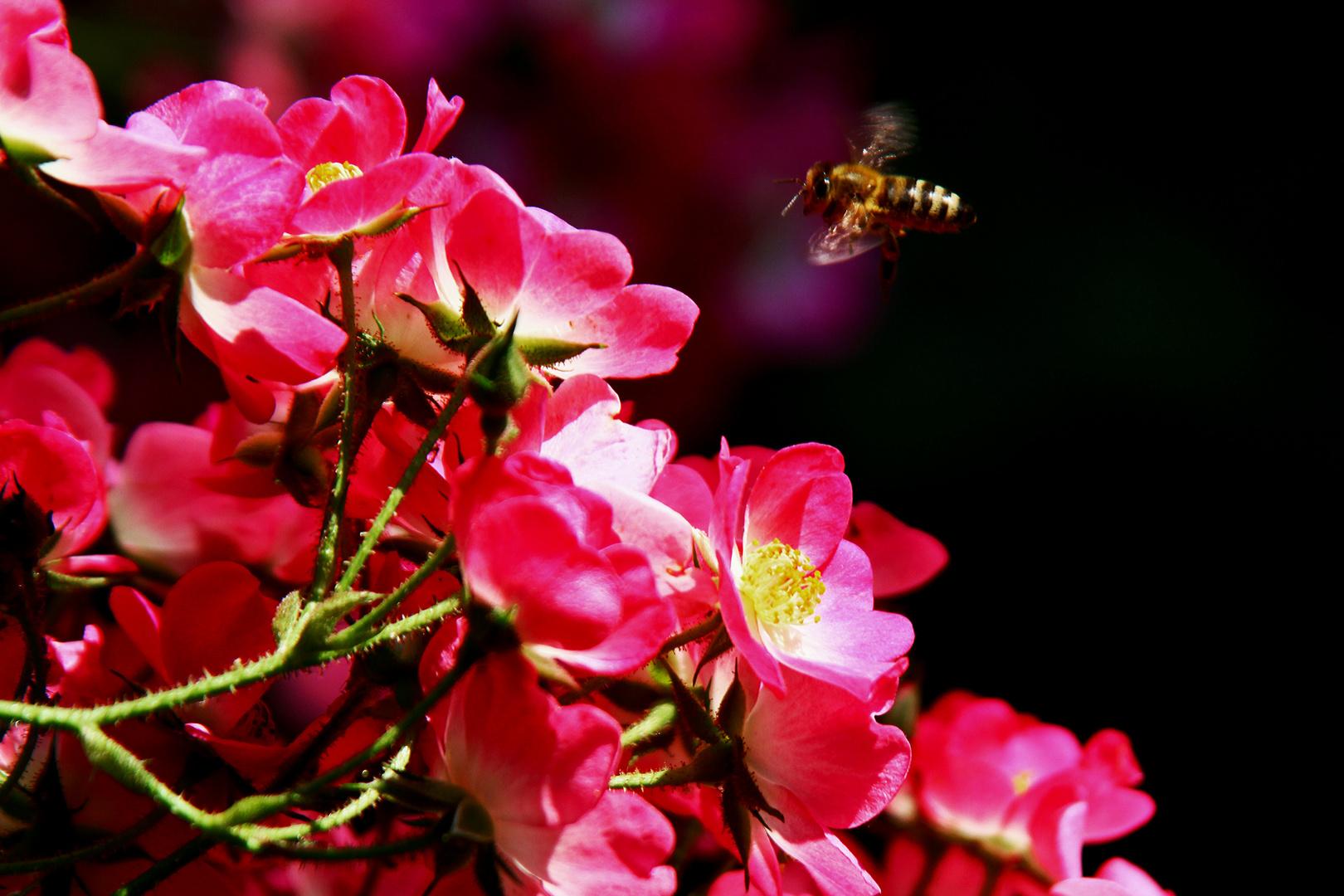 Ein Blühendes Wochenende....