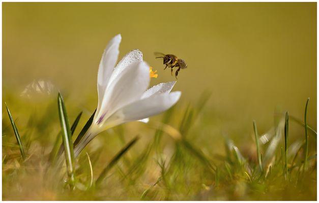 ein Blümchen fürs Bienchen