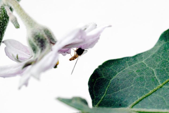 ein Blütenbesuch