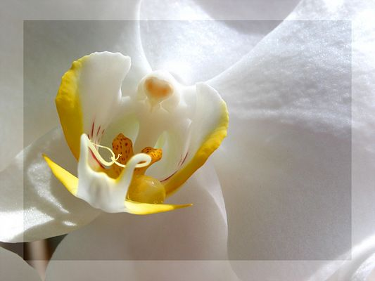 Ein Blütenengel