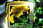 Ein Blütengelbes im Lichte zart gefangen... im Rahmen und doch beschreibend