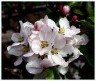 Ein Blütengruss zum Sonntag