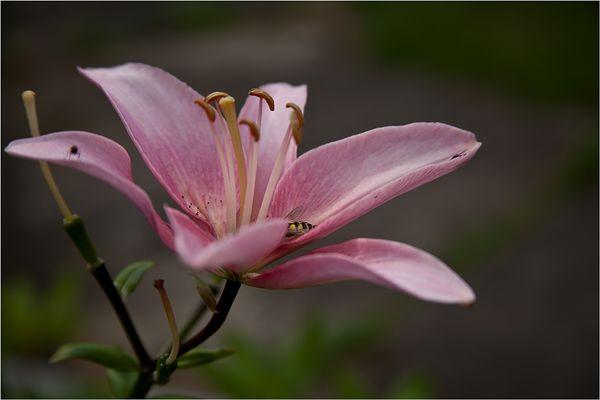 Ein Blütengruß zum Wochenende