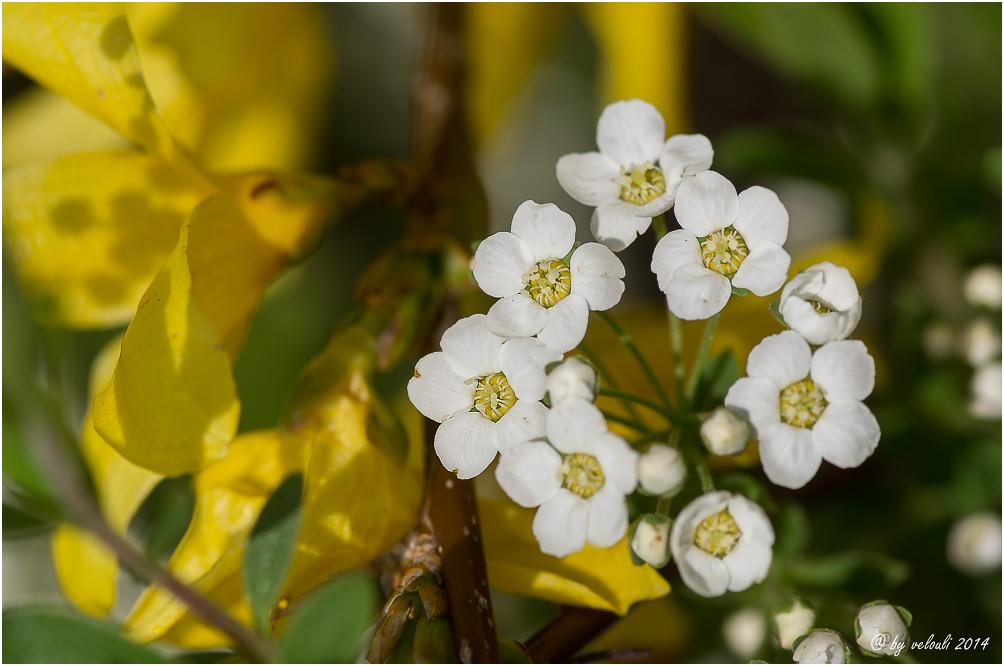 ein Blütenkranz