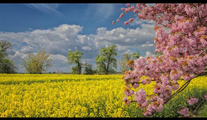 Ein Blütentraum ....