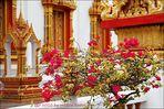 . . . ein blütentraum im wat chalong . . .