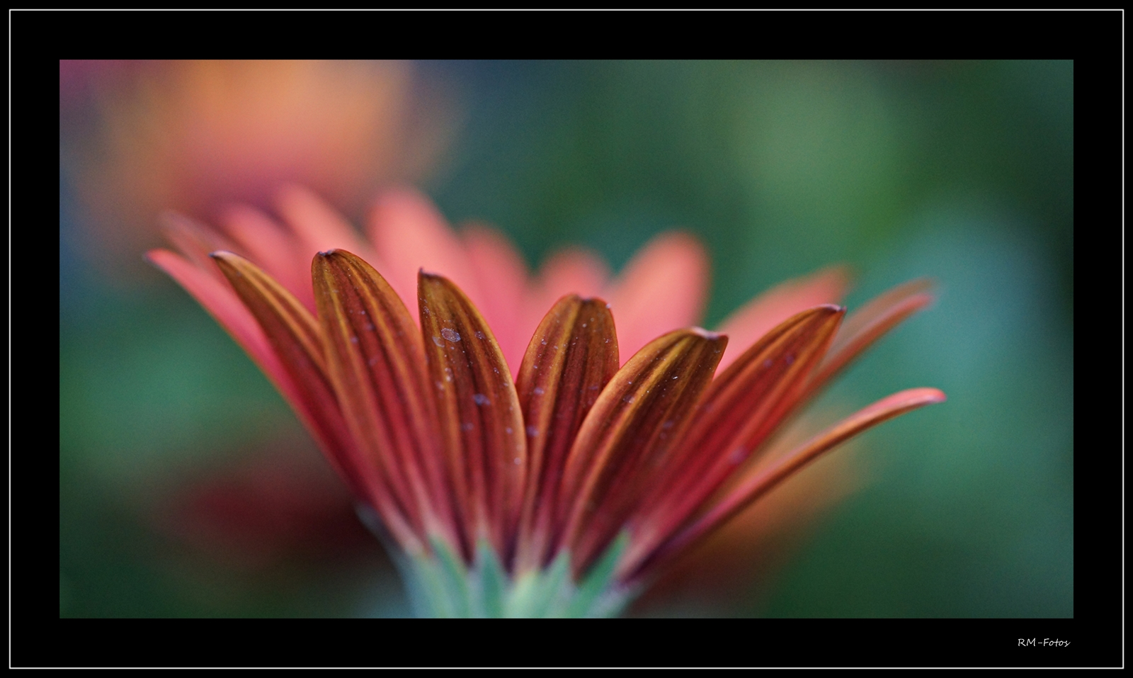 ein Blumenbild