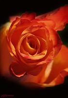 Ein Blumengruß...