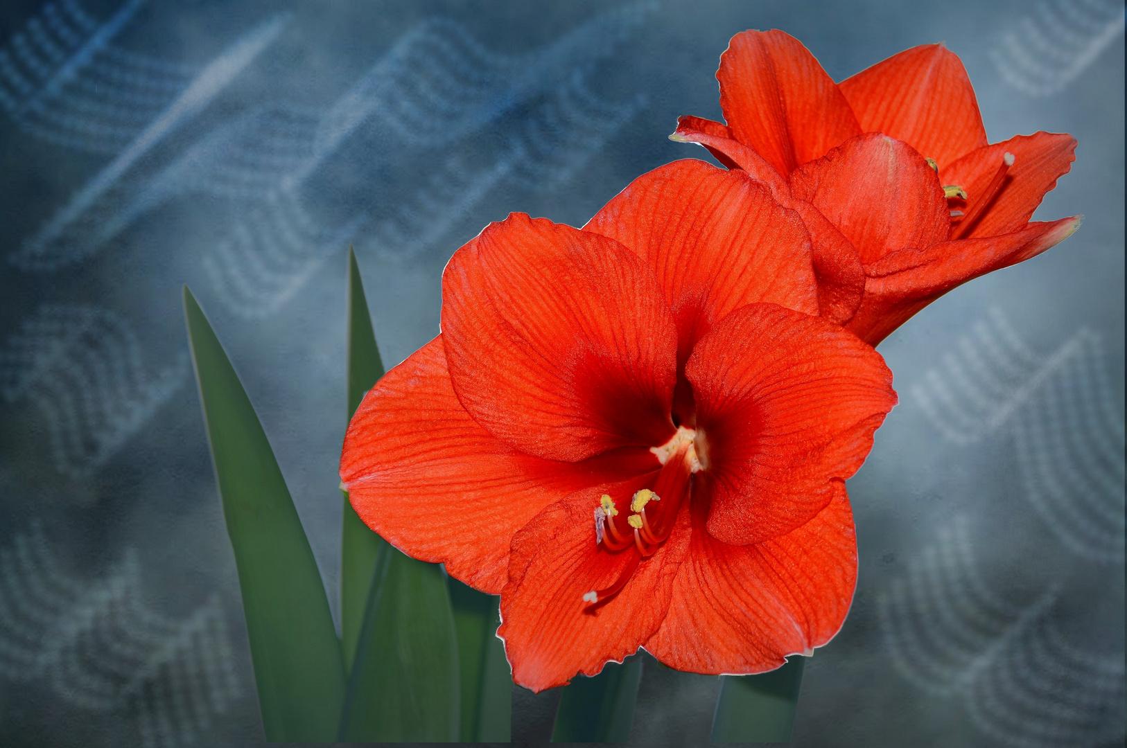 ein Blumengruß..