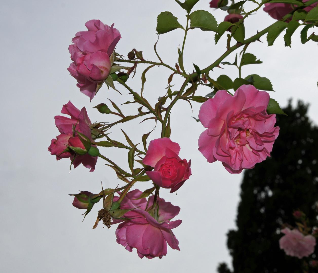 Ein Blumengruß an alle